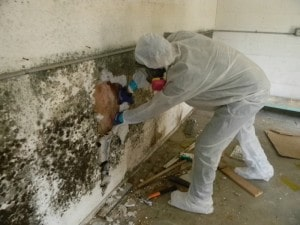 mould remediation and removal
