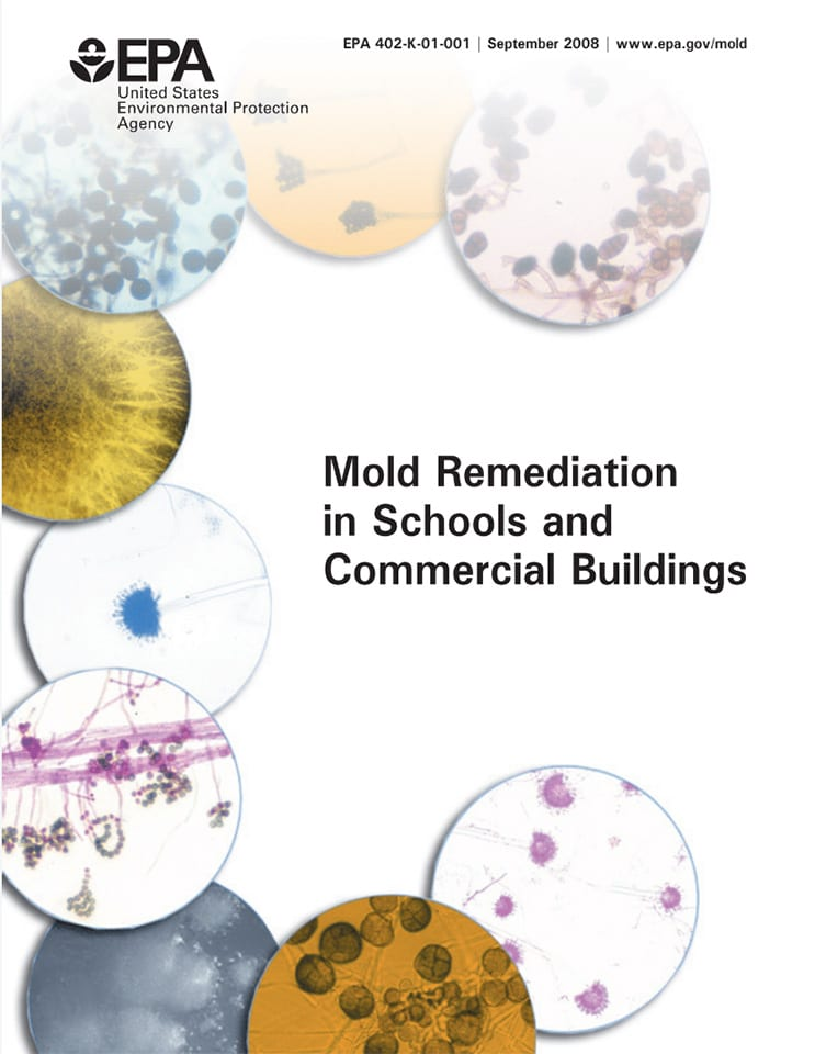 Whitepaper about mold remediation in schools and commercial buildings